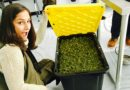 """PA cannabis moms featured on VICELAND's """"Weediquette"""""""
