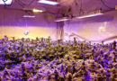 What's right for your grow: LED or HID lighting?